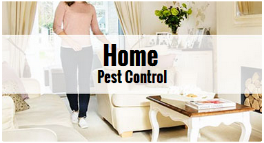 Do it yourself pest prevention tips solutioingenieria Image collections