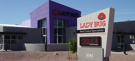 lady-bug-office